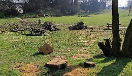 'Troppi alberi da abbattere, così il parco Bonaldi sarà deserto'