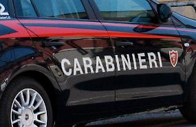 Serpenti protetti e ragni pericolosi sequestrati dai carabinieri forestali
