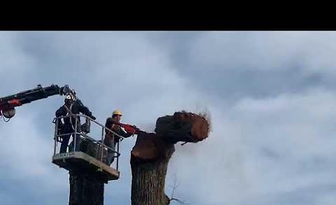 VIDEO L'abbattimento dell'olmo monumentale a Villanova