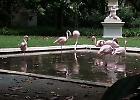 Milano, i fenicotteri rosa di Villa Invernizzi, oasi in città