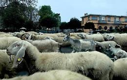 Pecore, capre e cavalli: la pacifica invasione