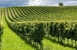 Agricoltura, accordo in Europa sulla riforma della Pac