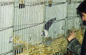 La versione degli animalisti: non facciamo uccidere