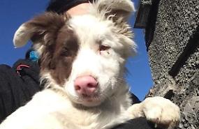 La storia a lieto fine di Johnny, il cucciolo sordocieco salvato dai volontari ha trovato casa a Milano