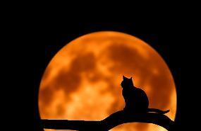 Il 20 marzo arriva la super Luna di primavera