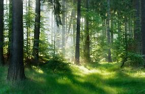 70mila ettari di foreste certificate, quasi raddoppiate in un anno