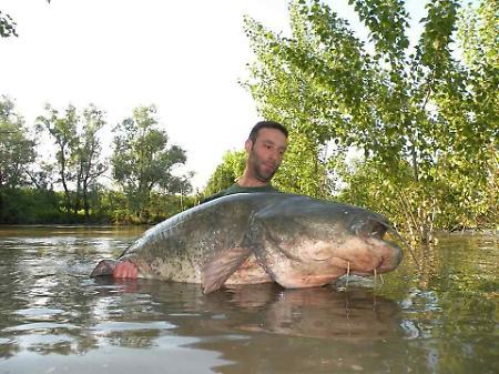 Siluro da 2 metri e 30 pescato nell'Oglio