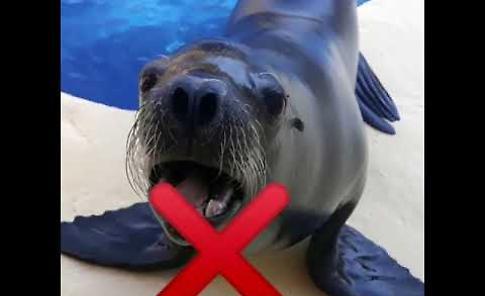 VIDEO Gardaland: i leoni marini ricordano le regole per evitare il contagio da Covid-19