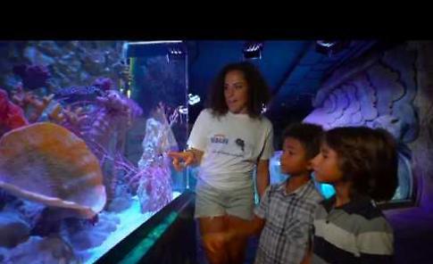 VIDEO Federica Brignone e Gardaland Sea Life Aquarium insieme per ripulire il Lago di Garda