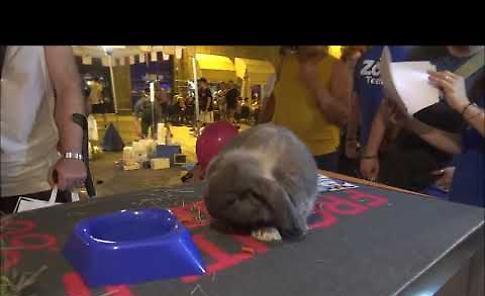 VIDEO Pet & Friends, gli animali protagonisti ai Giovedì d'Estate di Cremona